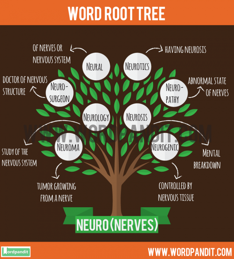 detailed article on neuro root word definition and words