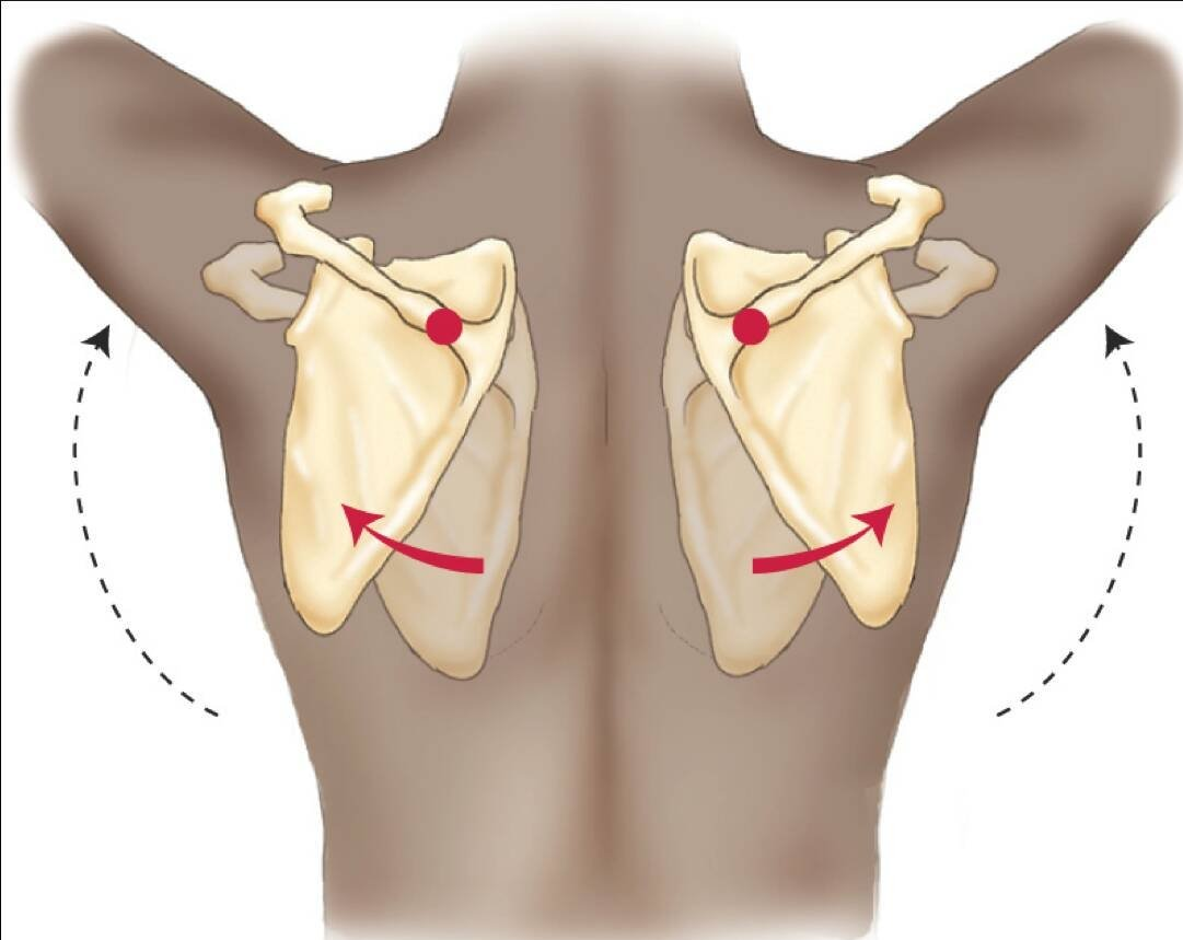 The number One Reason for Shoulder Impingement in CrossFit ...