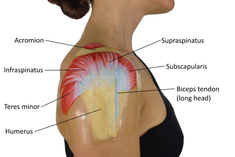 what does rotator cuff pain feel like body pain tips